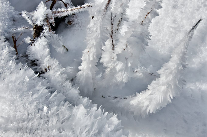 meadow-hoar-frost